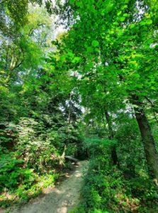GG Forest Therapy con Il Bosco Incantato1