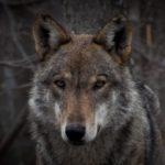 Dove vedere in natura gli animali selvatici più belli e affascinanti d'Italia