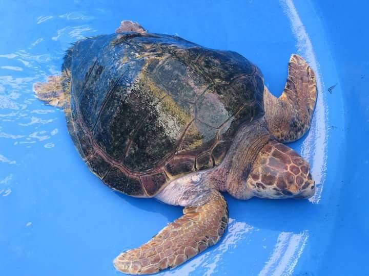 centro wwf tartarughe