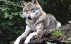 Animali selvatici italia dove trovarli