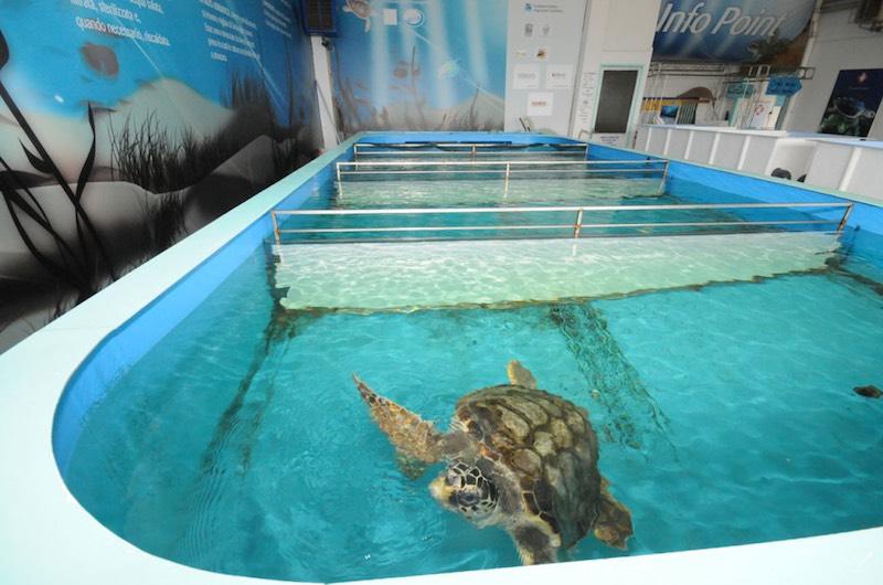 centro ricovero tartarughe