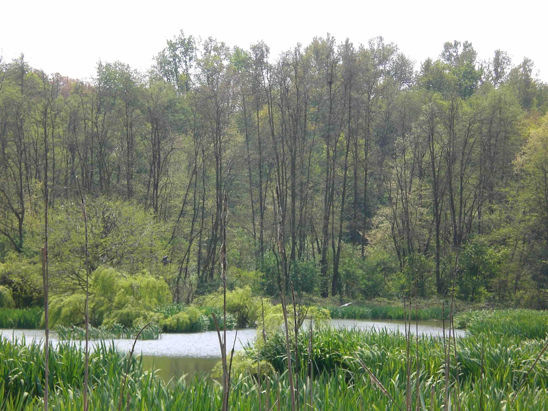 GG festa nazionale degli alberi forest theraphy 3