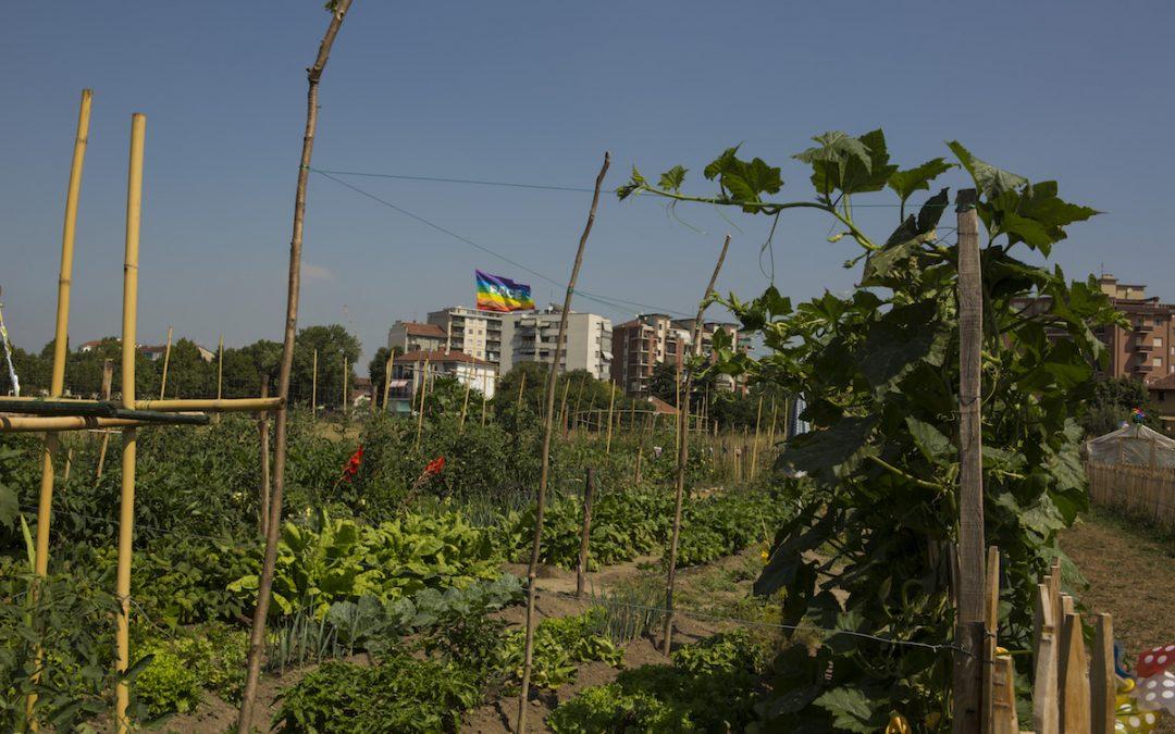 Orti generali: l'orticoltura che rigenera la città