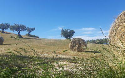 Kalabria Coast to Coast: il cammino perfetto da affrontare in famiglia